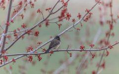 Warm weather brings the return of birds and the bloom of tree buds