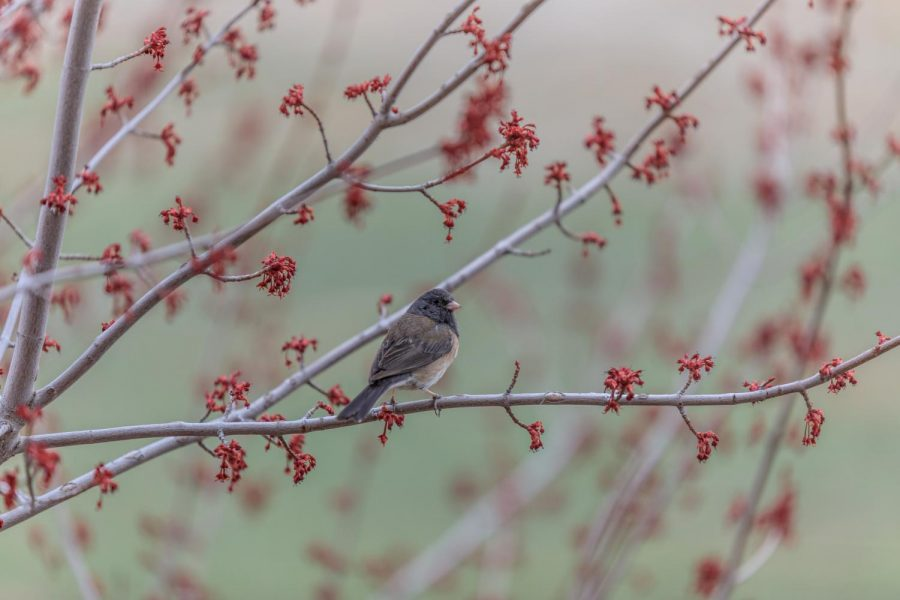 Warm+weather+brings+the+return+of+birds+and+the+bloom+of+tree+buds