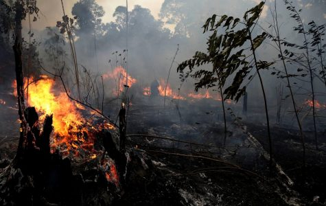 "The ""world's lungs"" are being consumed by fires in South America"