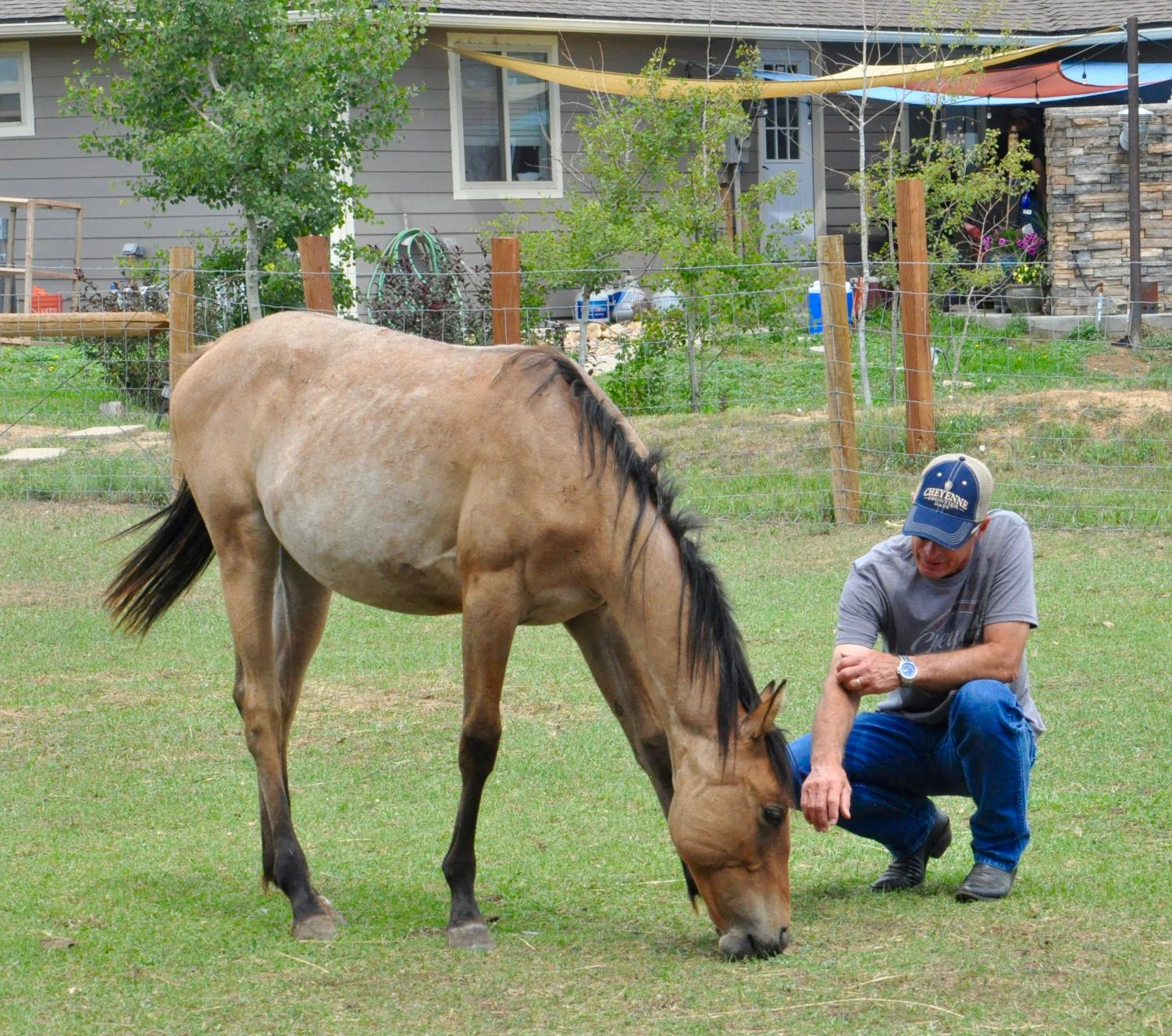 Local+non-profit+provides+opportunities+for+Veterans+through+equine+therapy