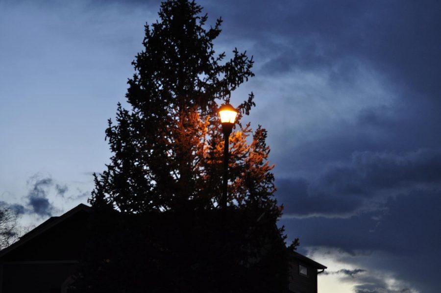 A tall source of light behind a dark tree.