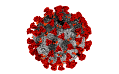 The Delta variant has been found to be more than twice as contagious as the original COVID-19 strain.